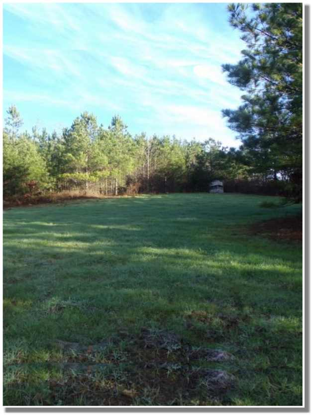 Timber land for sale in Alabama